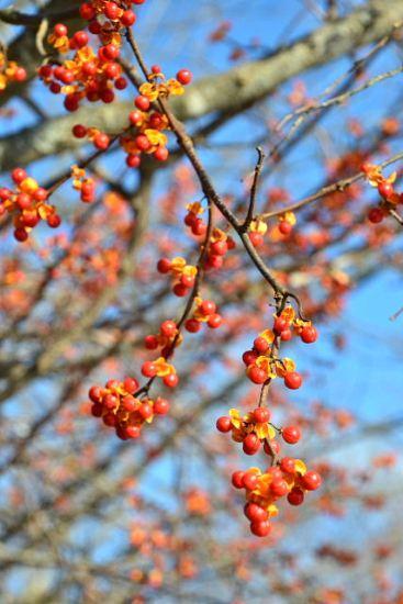 2012年11月26日(月):雪→雨[中標津町郷土館]_e0062415_19542994.jpg