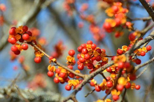 2012年11月26日(月):雪→雨[中標津町郷土館]_e0062415_19543648.jpg