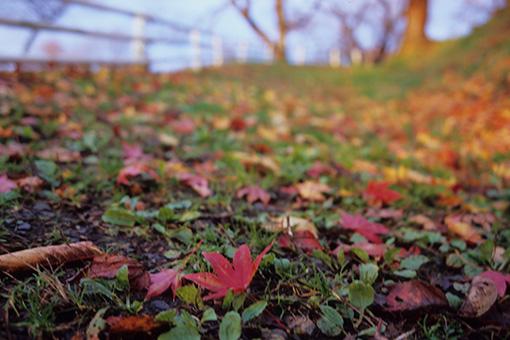 落ち葉の坂道上って_b0259218_2591337.jpg