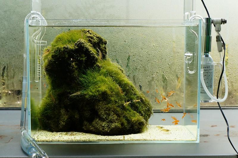 Nature Aquarium Gallery 2012 【2】_c0119618_218626.jpg
