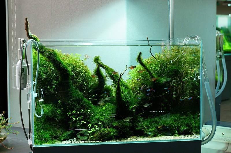 Nature Aquarium Gallery 2012 【2】_c0119618_2193599.jpg