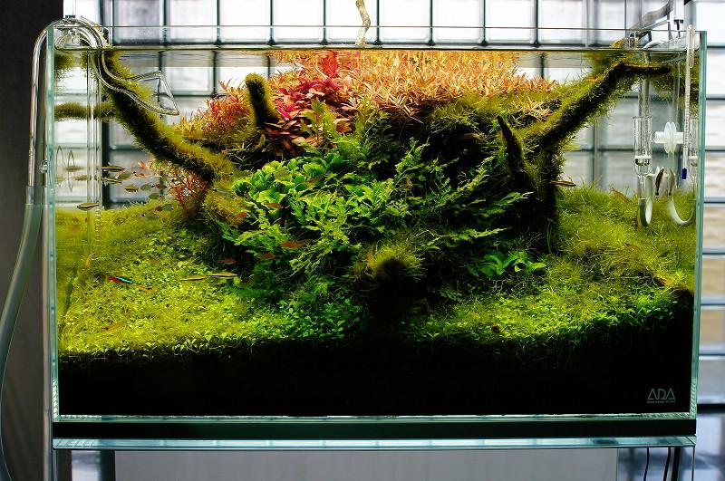 Nature Aquarium Gallery 2012 【2】_c0119618_2195260.jpg