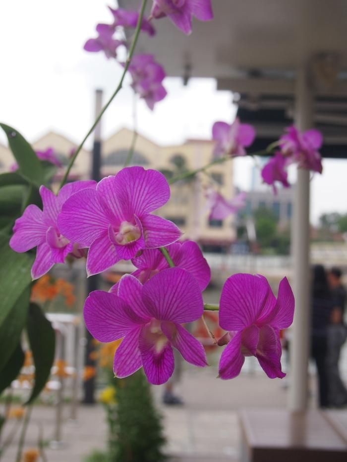 2012 9月 シンガポール (15)  友達とお茶@Cafe Epicurious_f0062122_14195955.jpg