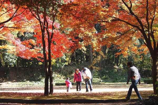 群馬の森 秋景色    _f0214527_10325514.jpg