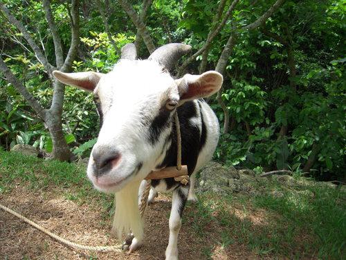 ★  牛?  ★_a0167338_20414128.jpg