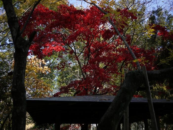 晩秋の縮景園2012_b0190540_812222.jpg