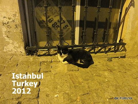 トルコ旅行記 26 イスタンブールの夜は賑やか!_a0092659_17423819.jpg