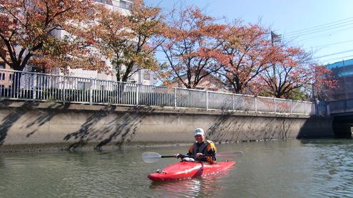 紅葉とカワセミ_c0249569_2159571.jpg