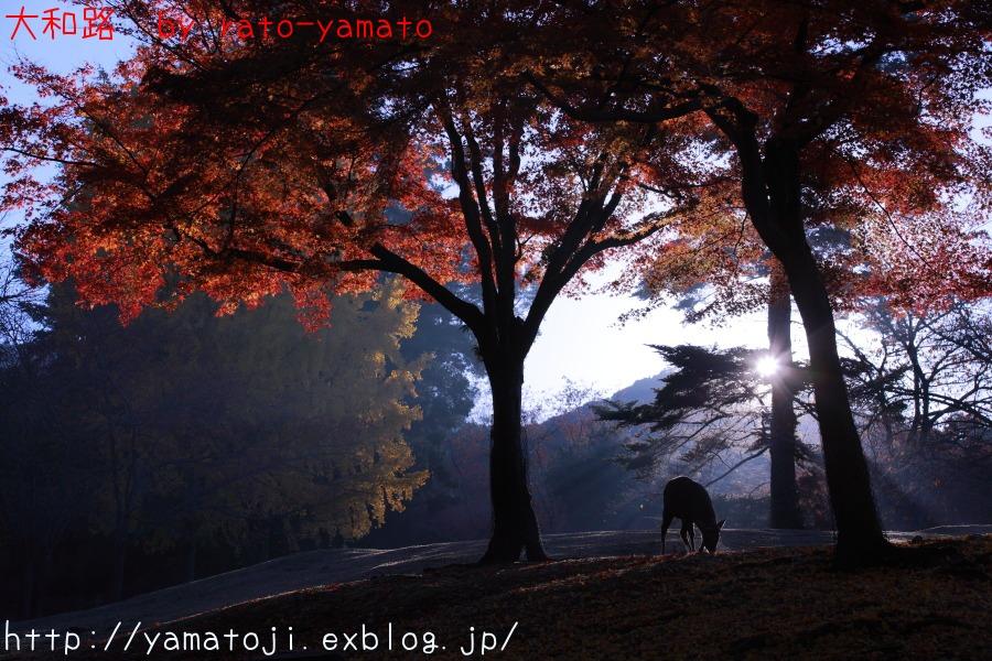 f0236776_2145222.jpg
