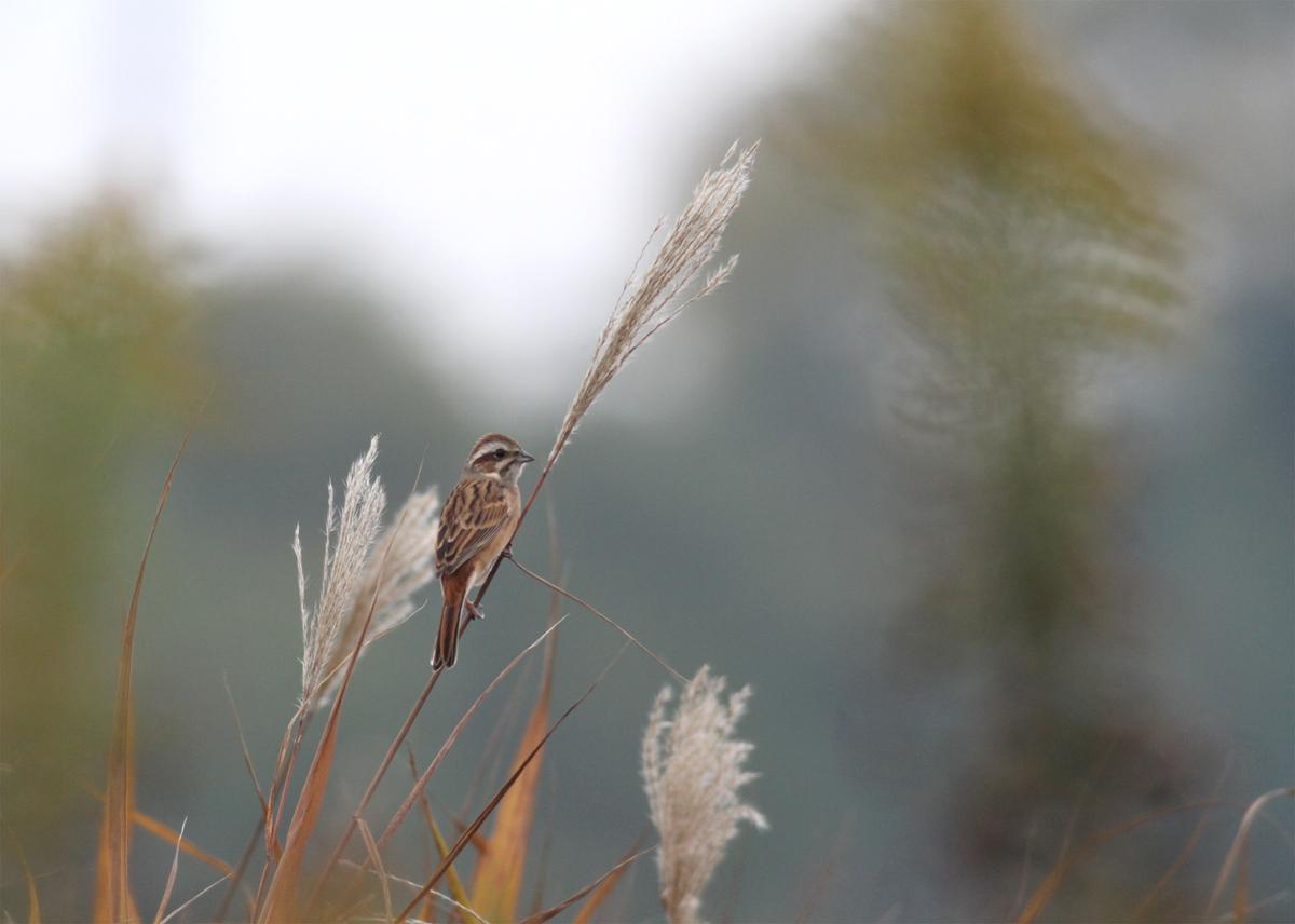 いろいろ野鳥_e0254493_0225513.jpg