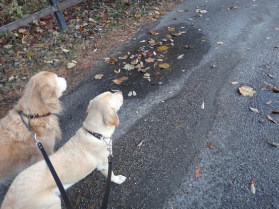 冬の訪れを感じる早朝散歩_f0064906_1819569.jpg