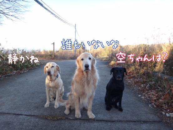 冬の訪れを感じる早朝散歩_f0064906_18244310.jpg