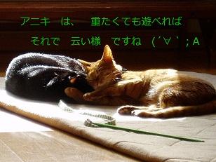 b0200310_16585085.jpg