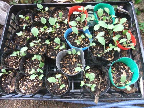 菜園の作業は..はまだ完了していません。_b0137932_21452058.jpg