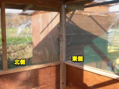 鳥小屋建築 9 ウコちゃん入居_c0063348_20151723.jpg