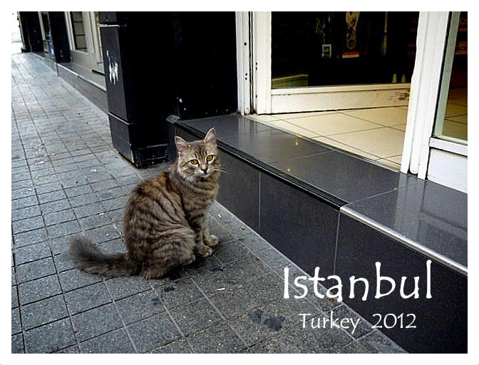トルコ旅行記 27 イスタンブール新市街_a0092659_2233222.jpg