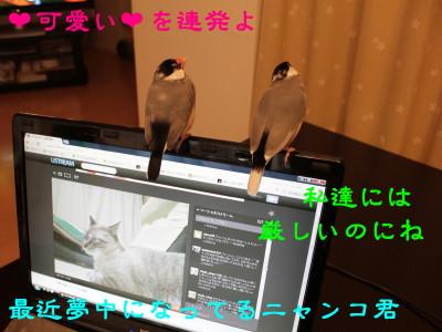 b0158061_227149.jpg