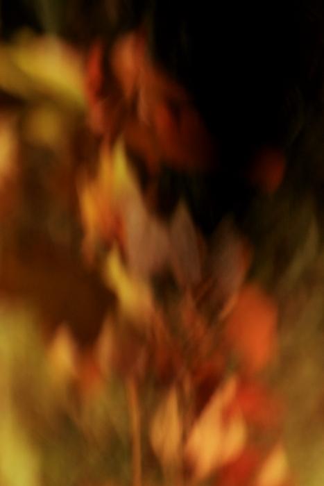 ■■The Art of Nature 2012 ~炎~ ■■_c0195662_22201535.jpg
