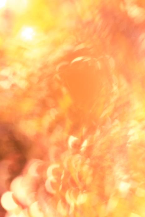 ■■The Art of Nature 2012 ~炎~ ■■_c0195662_22202895.jpg