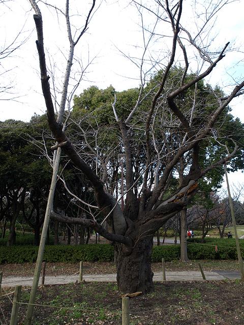 県立 青葉の森公園 (11/25)_b0006870_2038514.jpg
