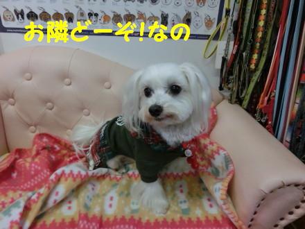 b0193480_1047115.jpg