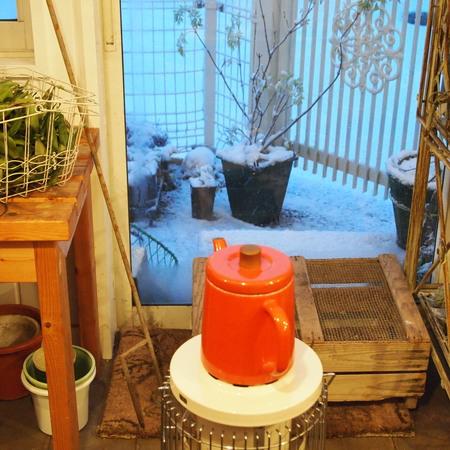 いよいよ雪です。エルダーフラワーにも雪が。_a0292194_2321567.jpg