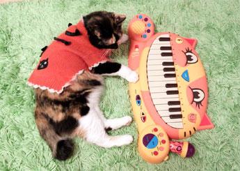 【にゃんこピアノ♪】アーティスティックな贈物ッ_d0224894_16234120.jpg