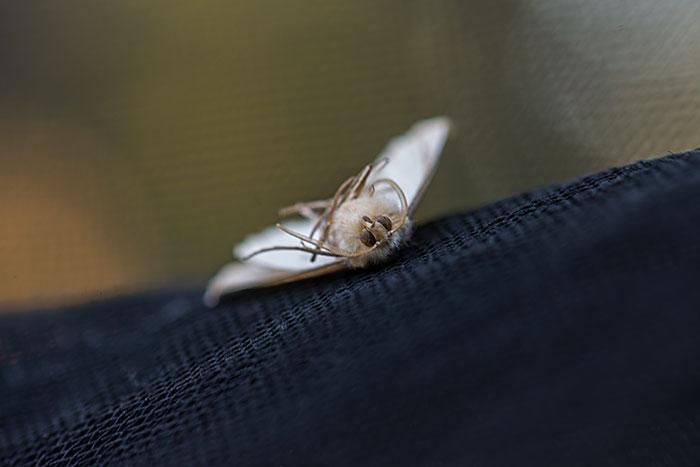 私設昆虫記-192 生と死の差分_f0215695_11483111.jpg