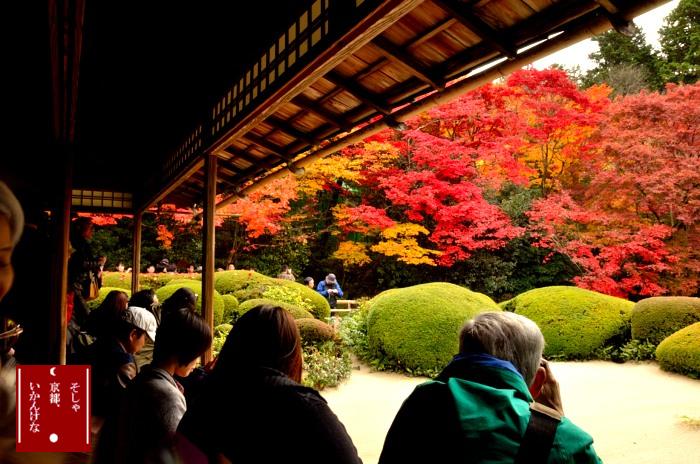 京の都の秋_a0258099_23201025.jpg
