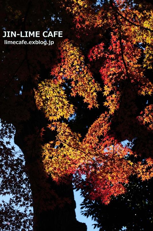 逆光に輝く紅葉_e0222506_18473230.jpg