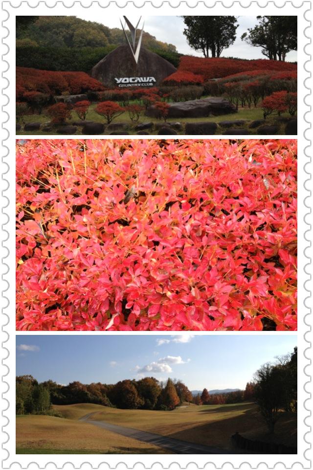 afternoon tea と 吉川カントリー_a0194908_1162616.jpg
