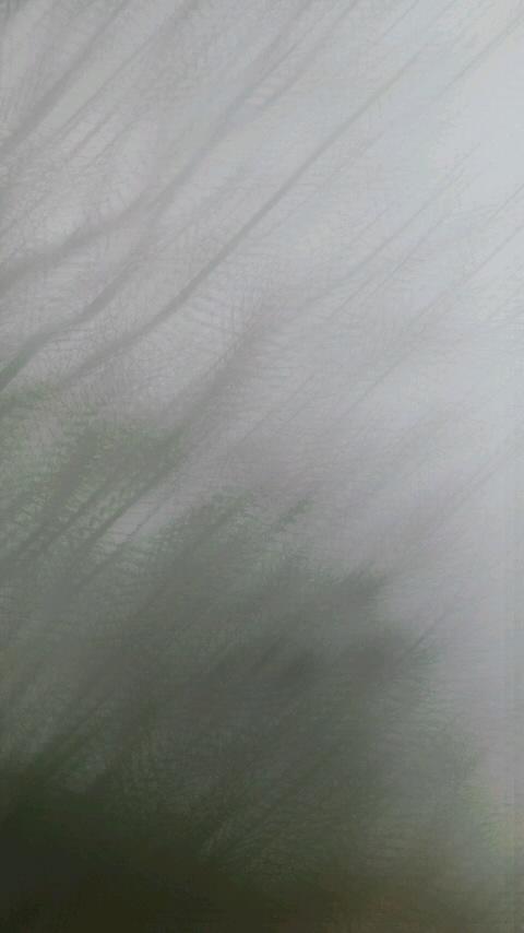 f0155808_135455.jpg