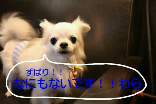 b0130018_1010215.jpg