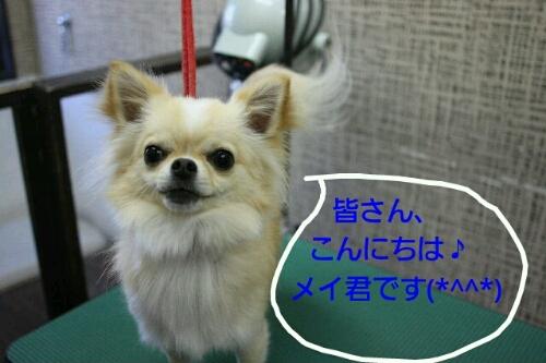 b0130018_10143147.jpg