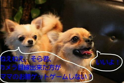 b0130018_10144041.jpg