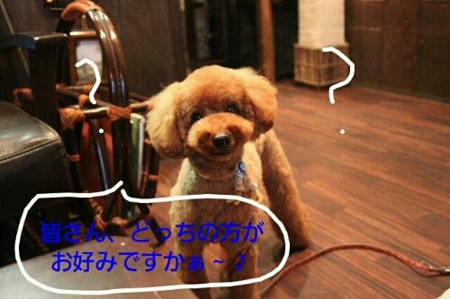 b0130018_959129.jpg