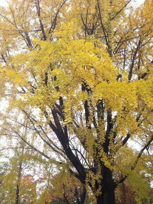 今週のお花とセール情報_a0200423_201124.jpg