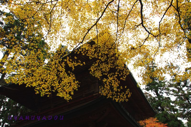 比叡山延暦寺.2012.11.18_a0157263_22263029.jpg