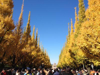 銀杏並木☆秋祭り_c0151965_201493.jpg