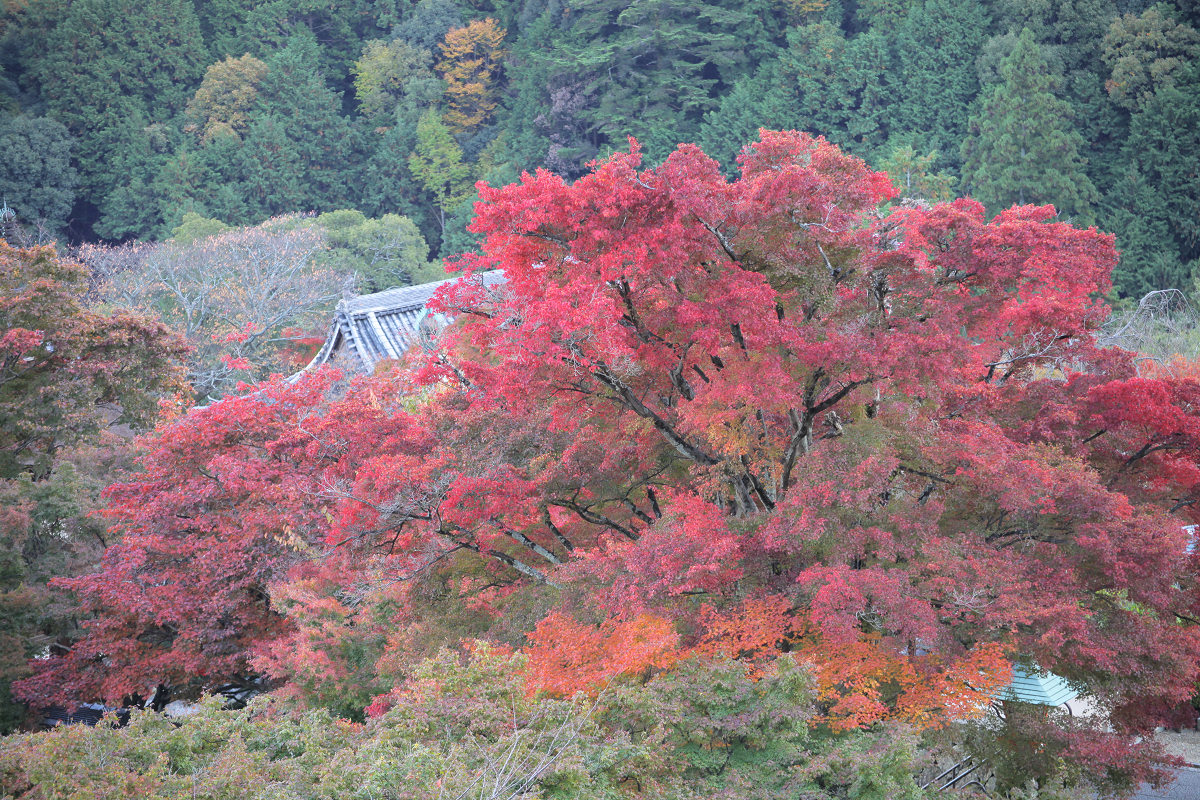 紅葉 2012  西山  善峯寺_f0021869_011453.jpg