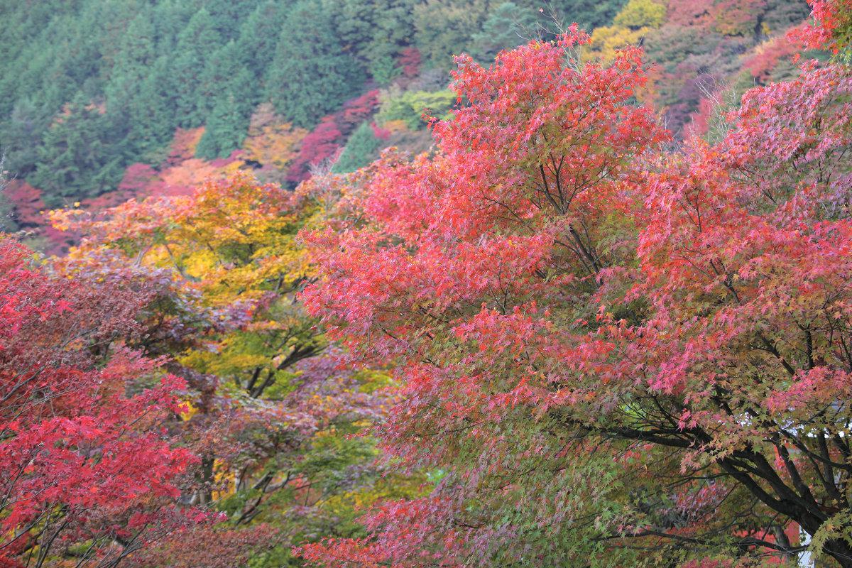 紅葉 2012  西山  善峯寺_f0021869_0145951.jpg