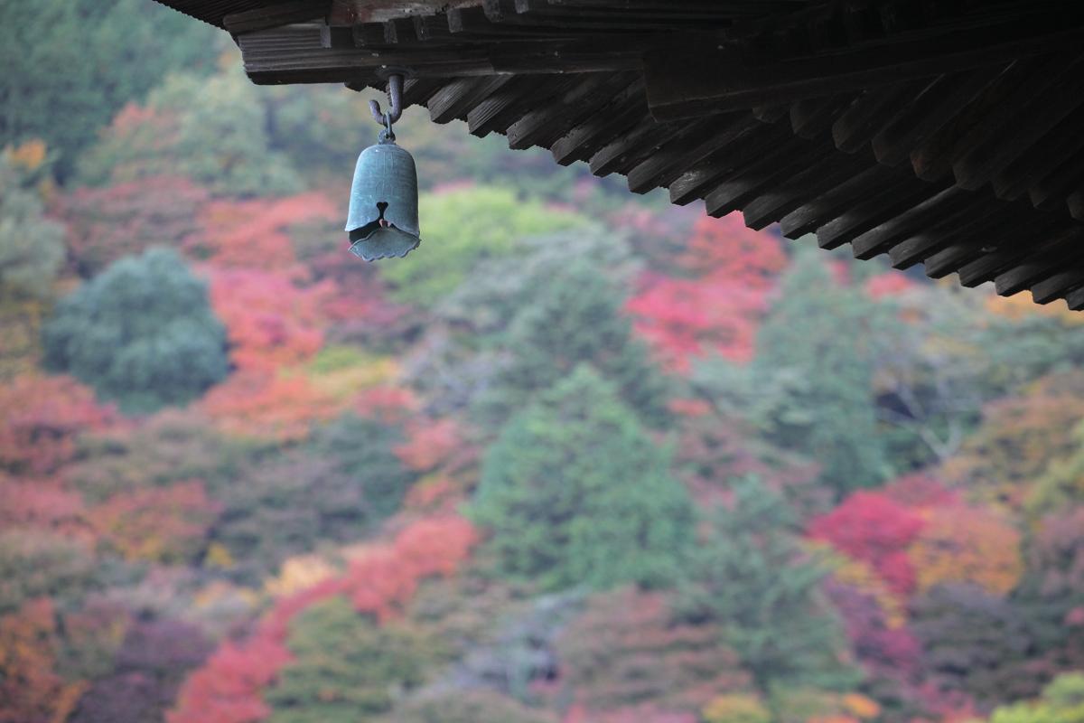 紅葉 2012  西山  善峯寺_f0021869_020070.jpg