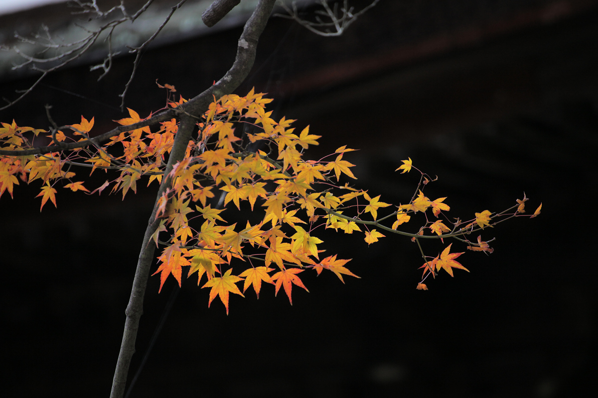 紅葉 2012  西山  善峯寺_f0021869_022437.jpg