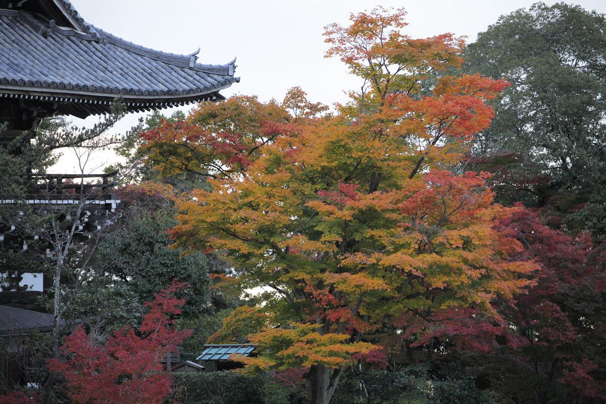 紅葉 2012  西山  善峯寺_f0021869_0283266.jpg