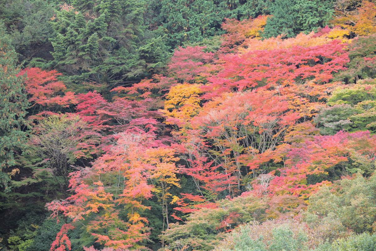 紅葉 2012  西山  善峯寺_f0021869_0295813.jpg