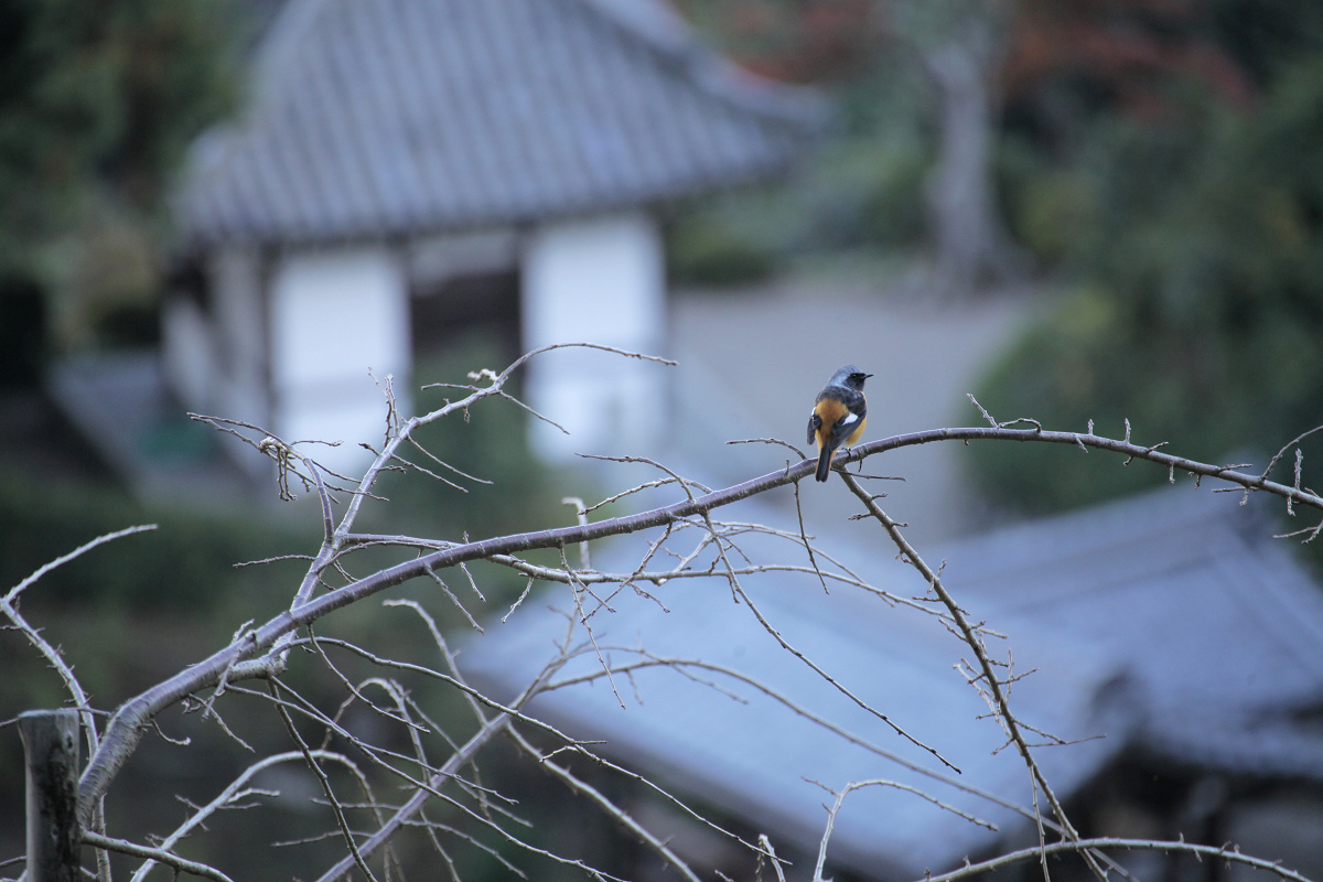 鳥_f0021869_038950.jpg