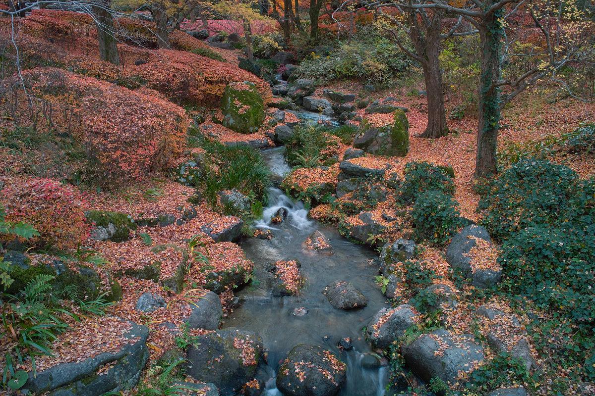 Foveon  de  紅葉 2012  IN  万博公園_f0021869_2146074.jpg