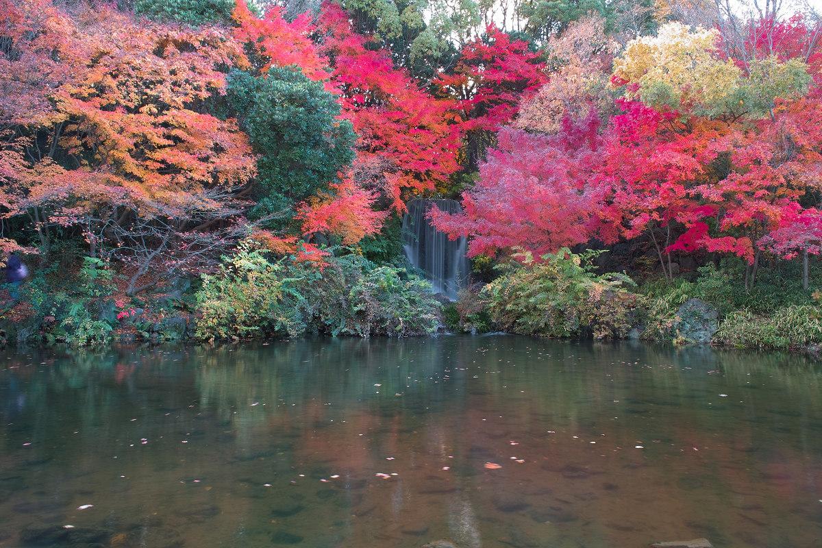 Foveon  de  紅葉 2012  IN  万博公園_f0021869_21484868.jpg