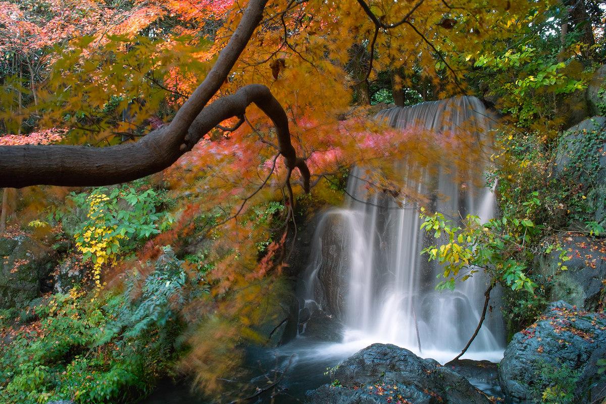 Foveon  de  紅葉 2012  IN  万博公園_f0021869_21512353.jpg