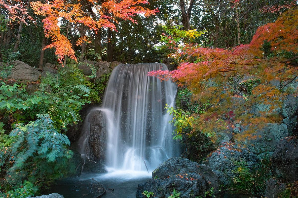 Foveon  de  紅葉 2012  IN  万博公園_f0021869_21532698.jpg